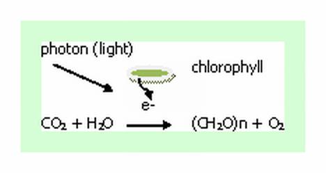 chloropyll photon formula